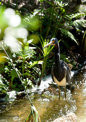 Photograph - Heron Fishing by Michelle Constantine
