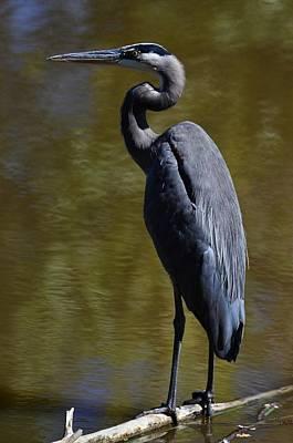 Photograph - Heron  In Green   Edition 2/5 by Rae Ann  M Garrett