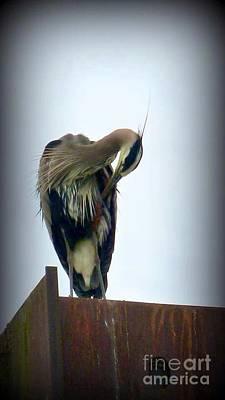 Photograph - Heron Grooming by Susan Garren