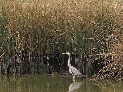 Photograph - Heron Habitat by Derek Dean