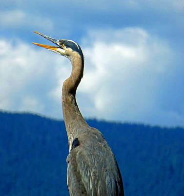 Photograph - Heron Hello by Laurie Tsemak