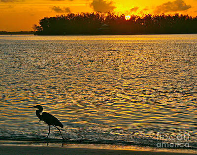 Photograph - Heron Hunting At Sunrise by Joan McArthur
