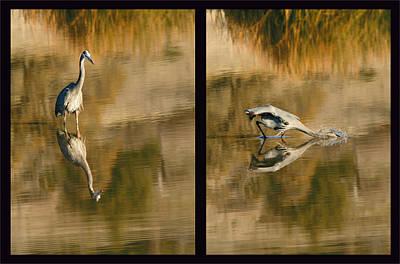 Photograph - Heron Hunting by Robert Woodward