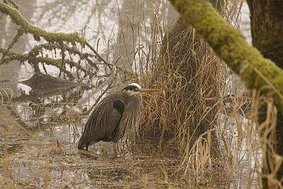 Photograph - Heron In A Fog W1111 by Wes and Dotty Weber