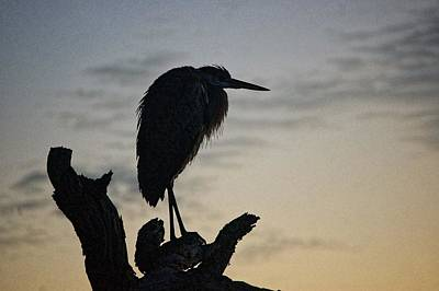Digital Art - Heron In A Tree by Michael Thomas