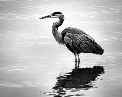 Photograph - Heron Black And White by Janice Drew
