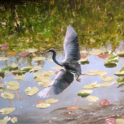 Heron In Flight Print by Tim Davis