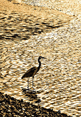 Photograph - Heron In Gold by Susan Parish