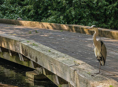 Photograph - Heron In London Central by Lenny Carter