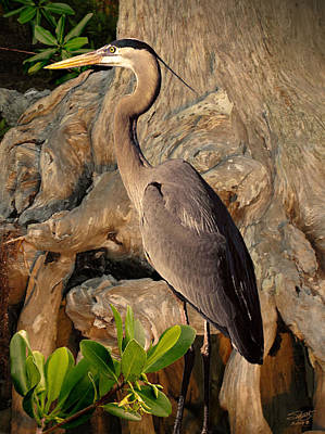 Photograph - Heron In Mangroves by IM Spadecaller