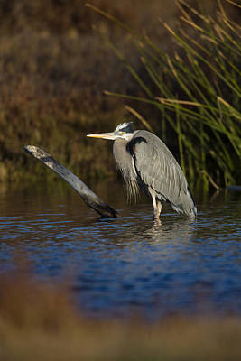 Photograph - Heron In Pond  73a0724 by David Orias
