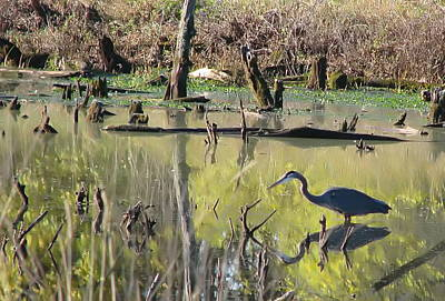Photograph - Heron In Pond by Angie Vogel