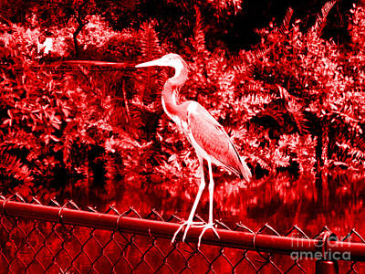 Photograph - Heron In Red. Bird by Oksana Semenchenko