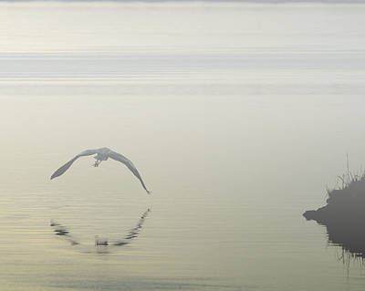 Photograph - Heron In The Mist II by Pete Federico