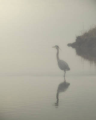 Photograph - Heron In The Mist by Pete Federico