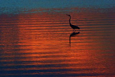 Photograph - Heron In The Water At Sunset by Daniel Woodrum