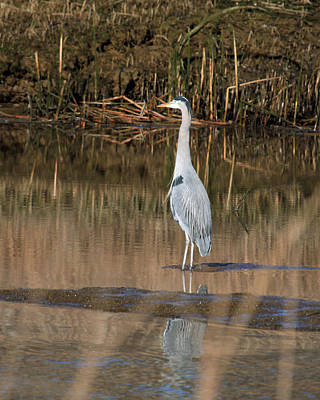 Photograph - Heron by John Bushnell