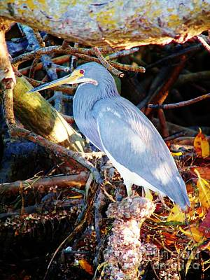 Photograph - Heron by Judy Via-Wolff