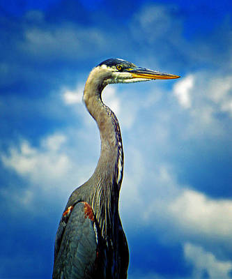 Photograph - Heron by Laurie Tsemak