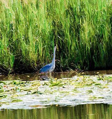 Art Print featuring the photograph Heron by Leif Sohlman