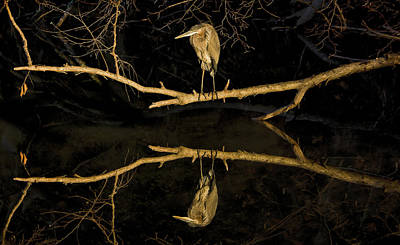 Heron Mirror On Maryland Canal Art Print by Francis Sullivan