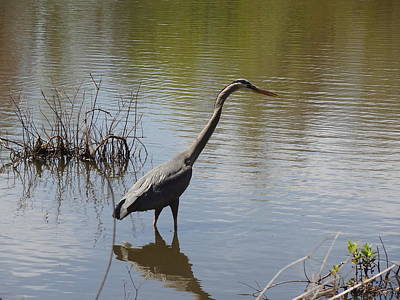Photograph - Heron by Nancy Fillip