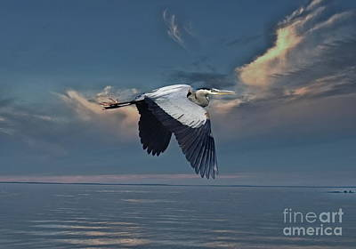 Heron Night Flight  Art Print