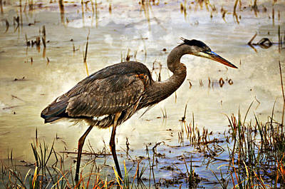 Heron On A Cloudy Day Art Print by Marty Koch