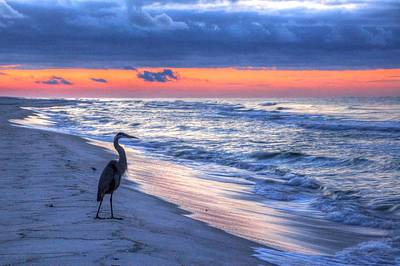 Heron On Mobile Beach Art Print