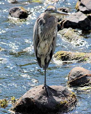 Art Print featuring the photograph Heron On One Leg by Kenny Glotfelty