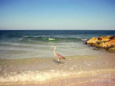 Blue Heron Photograph - Heron On The Beach by Zina Stromberg