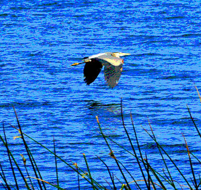Photograph - Heron On The Horizon by Joseph Coulombe