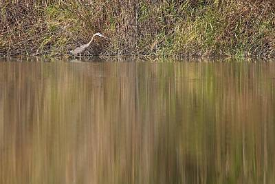 Photograph - Heron On The River's Edge by Stuart Litoff