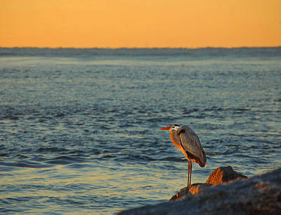 Digital Art - Heron On The Rocks by Michael Thomas