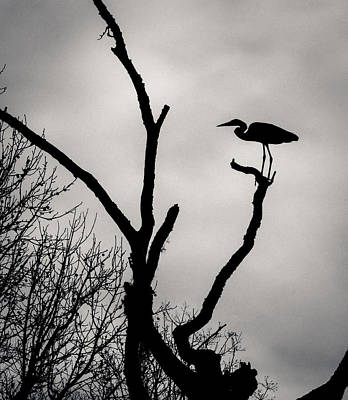 Thomas Kinkade Rights Managed Images - Heron on the Tree Royalty-Free Image by Gabrielle Harrison