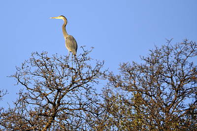 Photograph - Heron On Top by AJ  Schibig