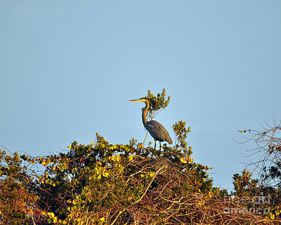 Heron Perch Print by Al Powell Photography USA