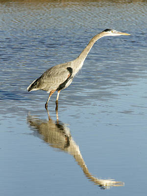 Photograph - Heron Putting His Neck Out by Jean Noren