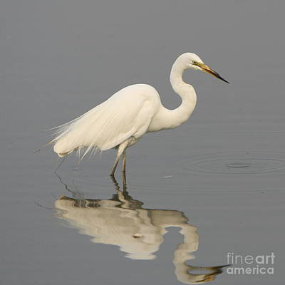 Photograph - Heron Reflections by Craig Dingle