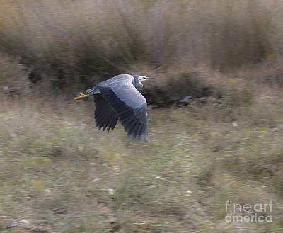 Photograph - Heron by Steven Ralser