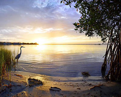 Photograph - Heron Sunrise by Francesa Miller