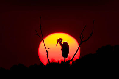 Avian Photograph - Heron Sunset by Benjamin DeHaven