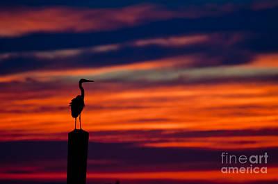 Photograph - Heron Sunset Silhouette by Richard Mason