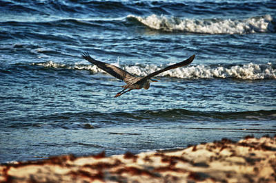Pier Digital Art - Heron Surf Cruising by Michael Thomas