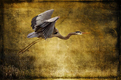 Photograph - Heron Texturized D8278 by Wes and Dotty Weber