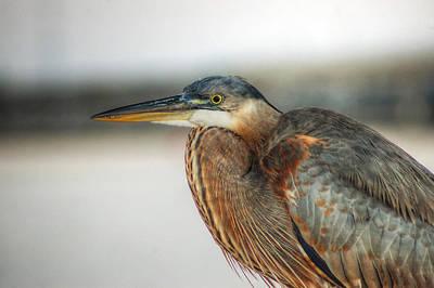 Digital Art - Heron Up Close No.4 by Michael Thomas