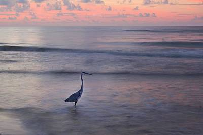 Digital Art - Heron Walking On A Pink Morning by Michael Thomas