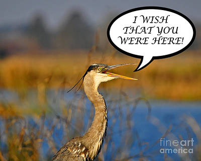Gray Heron Photograph - Heron Wish You Were Here Card by Al Powell Photography USA