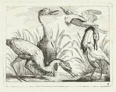 Herons At A Puddle, Peter Casteels IIi Art Print