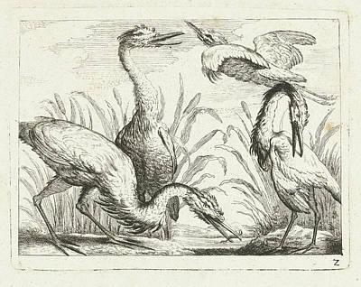 Herons At A Puddle, Peter Casteels IIi Print by Peter Casteels (iii)